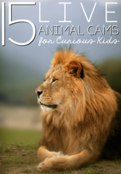 Bring your homeschool animal studies to life with a few of these live animal cams for kids!