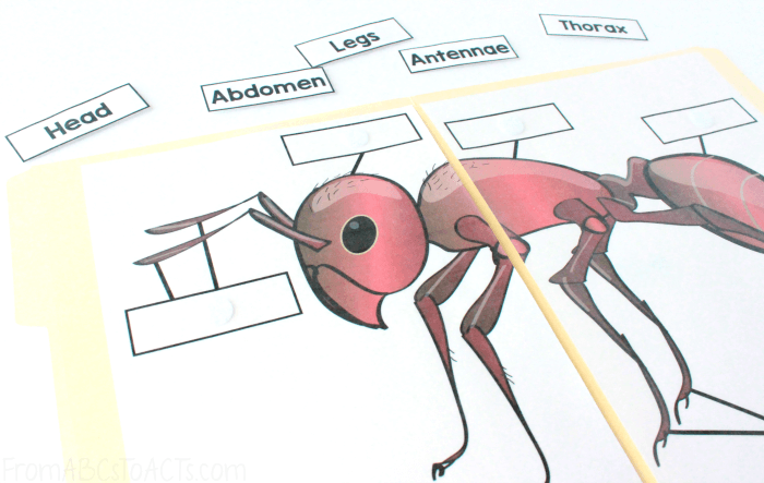 Insect Diagram Labeling File Folder Game