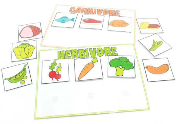 Carnivore and Herbivore Sorting Activity